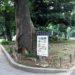 大川内君、 第30回 上野の森美術館 日本の自然を描く展で上位入選!